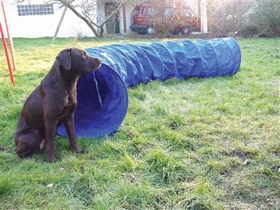 Pacific Play Tents Dog Agility Chute (8ft) and Tunnel (3ft)